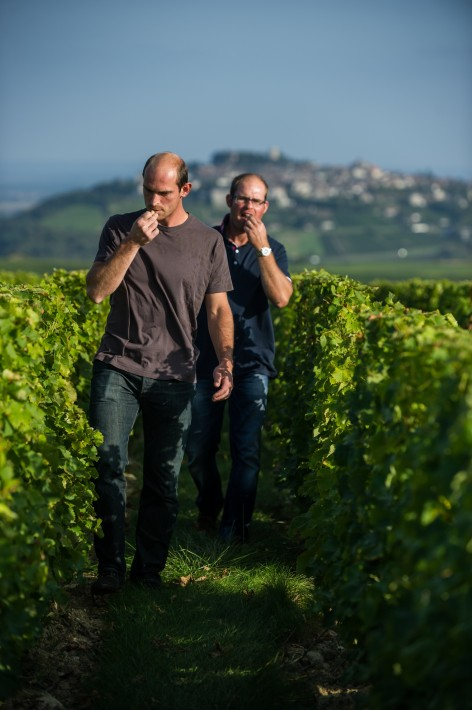 Domaine Matthias & Emile Roblin Vineyards