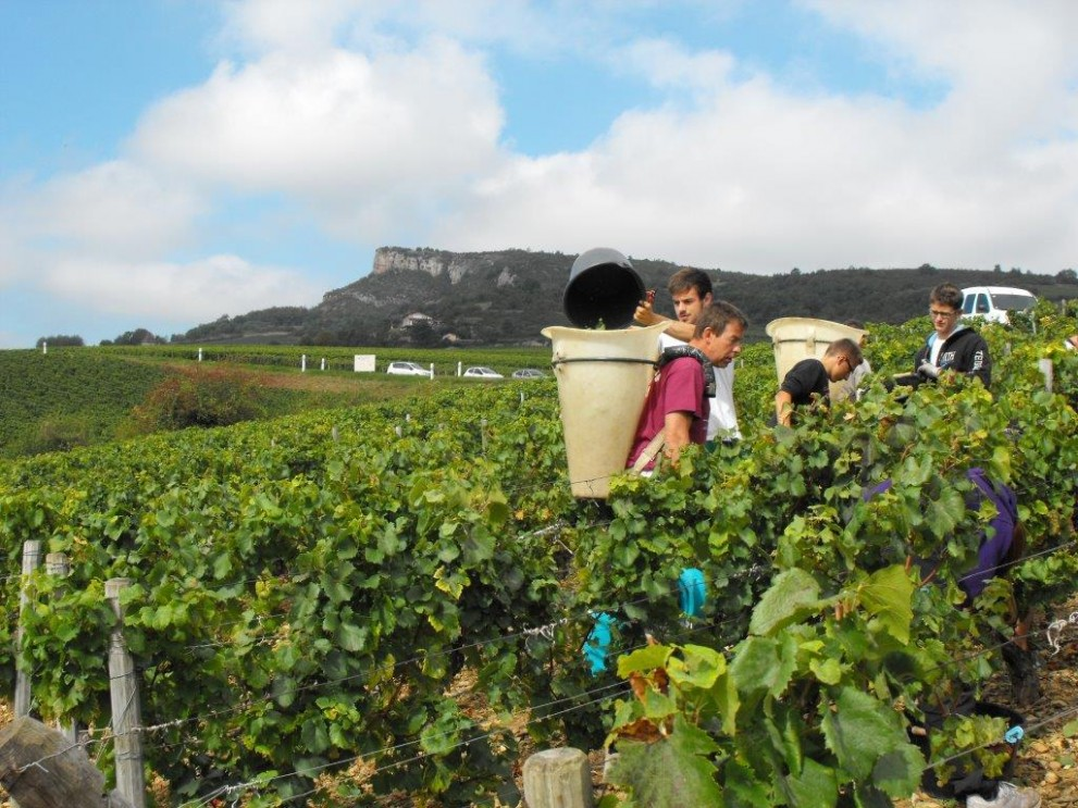 Domaine Sylvaine & Alain Normand harvest