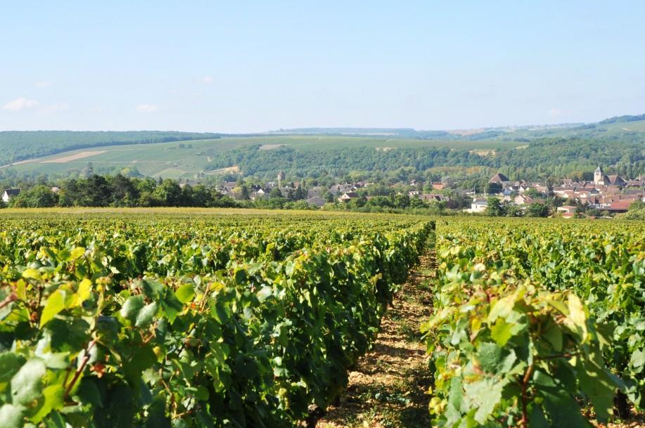 Domaine des Hâtes vineyard