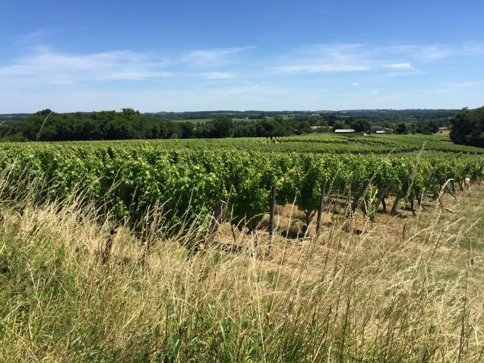 Château Haut-La Péreyre vineyards