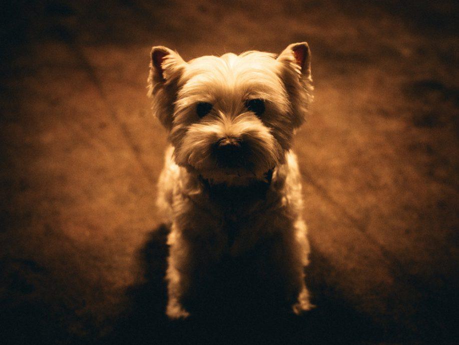 Domaine Jean-Michel Gaunoux dog