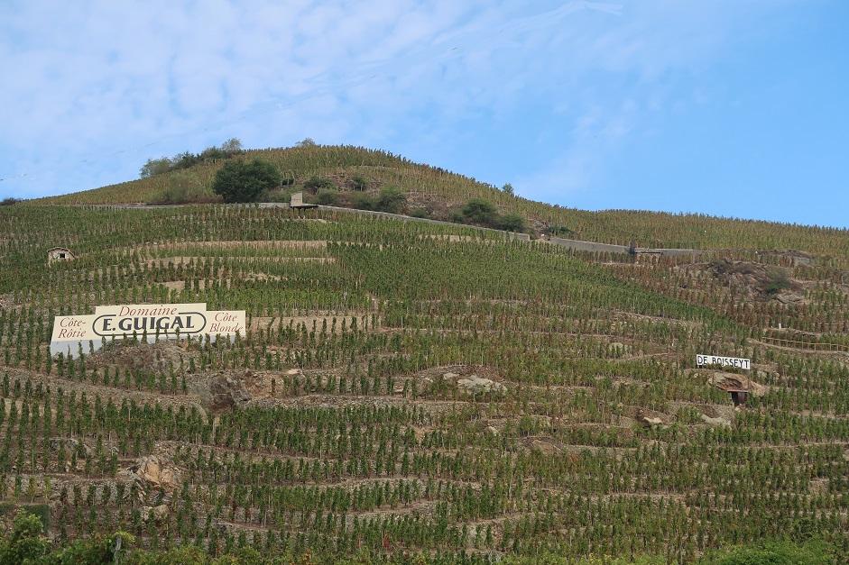 De Boisseyt vines