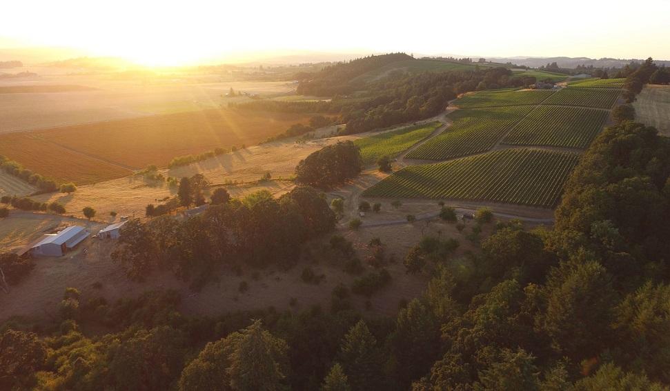 Belle Pente vineyard