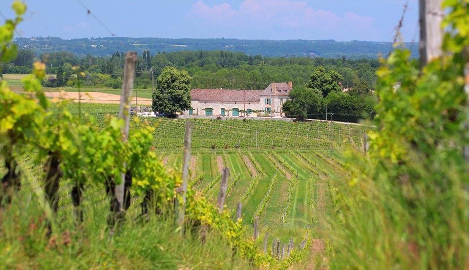 Chateau Marie Plaissance vines