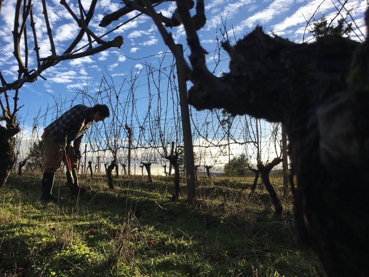 Goodfellow vineyards